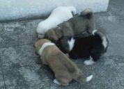 akita: el mejor perro del mundo