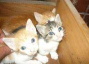 Vendo unos lindos gatitoss tan solo $10c/u llamame ahora solo kedan 4