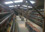 Granja avicola