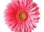 En quito cuenca ibarra con la auriculoterapia y las flores de bach , usted podrá …