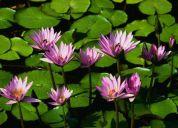 Fibromialgias tratamientos con terapia floral quito