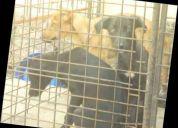 Necesitamos que nos ayuden en la obra de seguir ayudando los perros de la calle