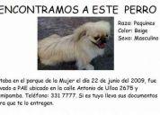 perro pequinés beige crema macho encontrado en el parque de la mujer 22 de junio 2009