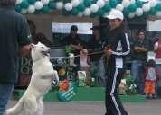 adiestramiento canino básico y avanzado
