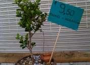 Arboles bonsai a precio de regalo  $9,50