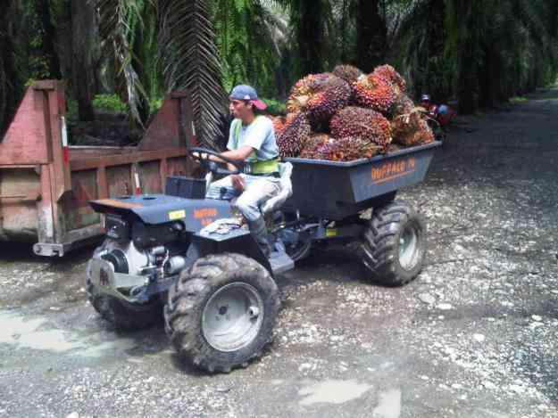 BUFFALO 10 MY, Cuadron 4x4 para cosecha de palma africana
