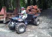 Palma africana, buffalo 10 my , cultivo de palma africana