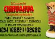 Garantizado!!!!! mariachi chihuahua 095885614