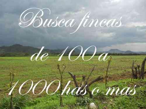 Busca fincas de 100 hectáreas o más.