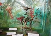 Visita un museo zoolÓgico