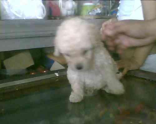 Adoptar perros en Ecuador