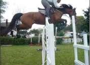 Venta de caballos para salto