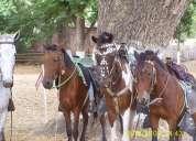 Piscina, caballos. canchas, fiestas y eventos.