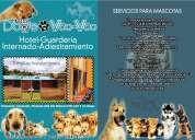Hospedaje canino..!!  amplias habitaciones confortables para tu mascota, espacios de esparcimiento;