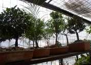Bonsais - clinica del bonsai - mantenimiento - zamorana ofrece