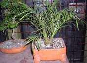 Clinica del bonsai - mantenimiento