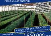 Importante floricola de venta en cotopaxi