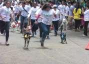 Paseo de perritos