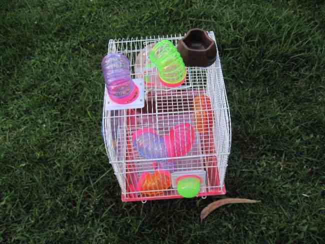 vendo jaula de hamster