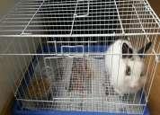 Conejito de raza pequeña y jaula por viaje