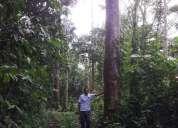 Vendo bosque de maderas tropicales y de balsa