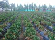 Terreno yaruqui