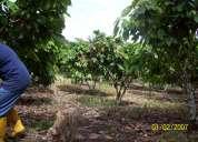 Urgente   vendo  finca de 47 hectareas