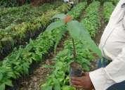 Vivero agroforestal de carlos tello