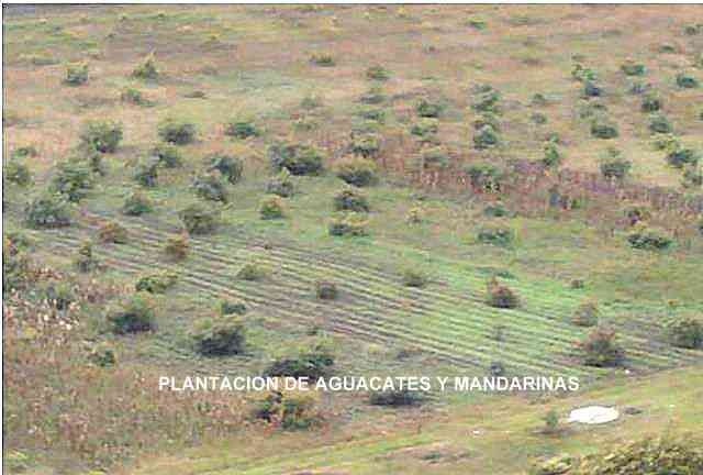 FINCA DE 11 HAS. EN PIMAMPIRO-IMBABURA
