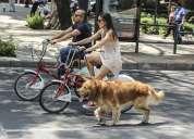 De oportunidad vendo bicicleta clásica