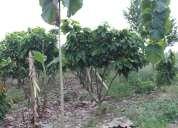 Vendo hermosa propiedad cacaotera