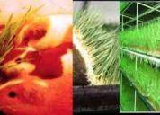 Fabricamos módulos de forraje verde hidroponico totalmente automatizados.