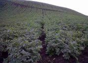 Hacienda el rosario en  el sur de quito