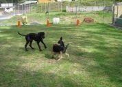Hospedaje y guarderia canina