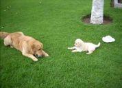 Tumbaco ecuador perros perdidos