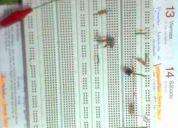 Estudiante en ingeniería en sistemas