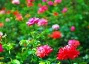 Purificacion y florecimiento en este  nuevo aÑo. tarot en guayaquil