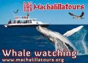 Tour observacion de ballenas jorobadas whale watching tours