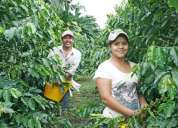 Ingeniero agronomo de campo, cafe organico