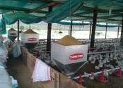 Construcción y equipamiento de galpones avícolas en cualquier parte del ecuador.