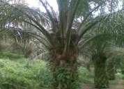 Hhermosa quinta