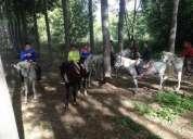 Rutas a caballo para grupos divertido