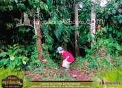 Convenientes terrenos ecologicos de venta