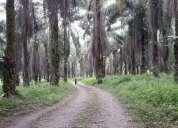 Hermosa finca 7 hectáreas de pala