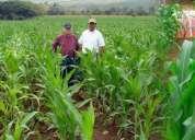 Compro maiz, soya, frejol, etc directo del agricultor