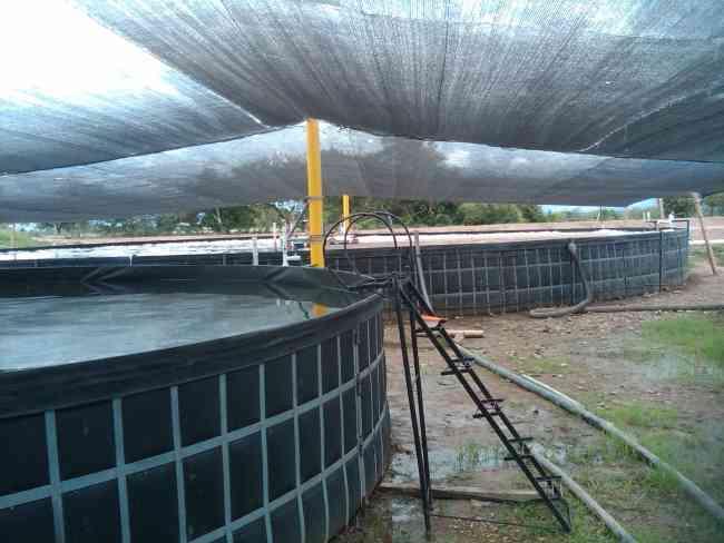 Negocio rentable venta de piscinas para cultivo de camaron for Criadero de camaron en estanques circulares