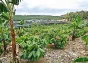 Vendo linda hacienda de 525 hts en  naranjal provincia del guayas